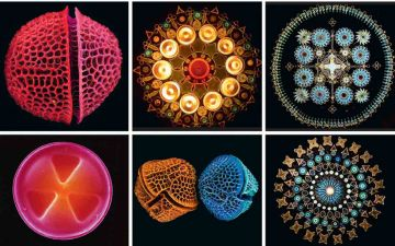 Краса мікроскопічного ЛОГО.jpg
