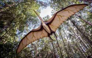 Птерозаври літали як ЛОГО.jpg