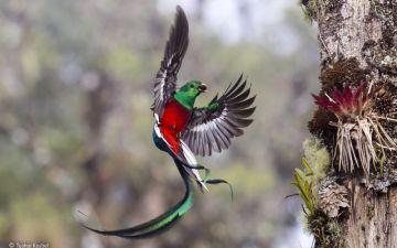 Великий вибух еволюції птахів.jpg