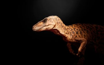 белок-динозавров.jpg