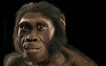 Це мавпа. Це людина ЛОГО.jpg