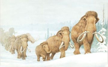 d79c9e701decd7979784ec8331f01d33--ice-age-extinct-animals.jpg