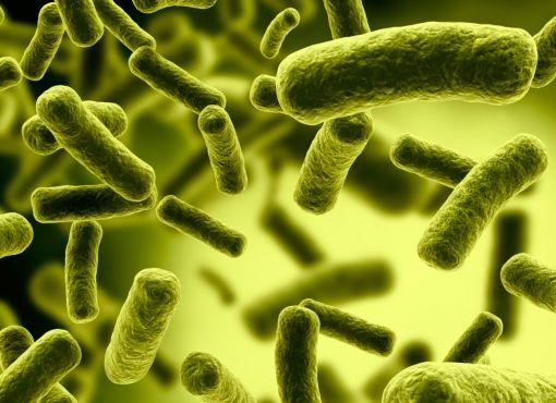 полезные-бактерии.jpg