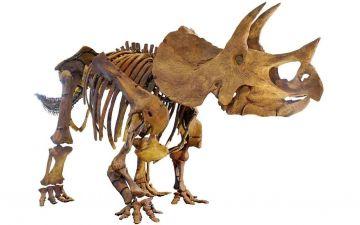 Трицератопс живі ЛОГО.jpg